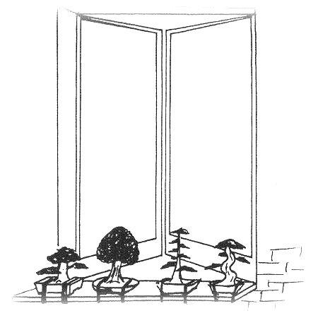 donde se coloca un bonsai de interior 1 1