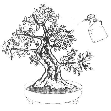pulverizado de un bonsai 1