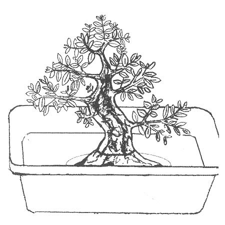 riego de bonsai por inmersion 1